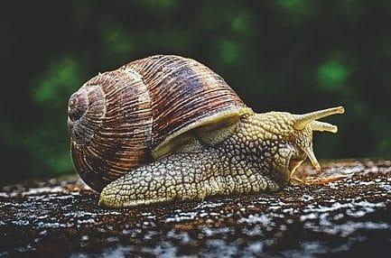 snail farming in ghana