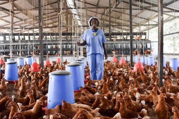poultry farming ghana