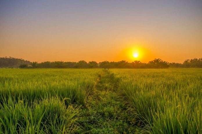 farmland price ghana
